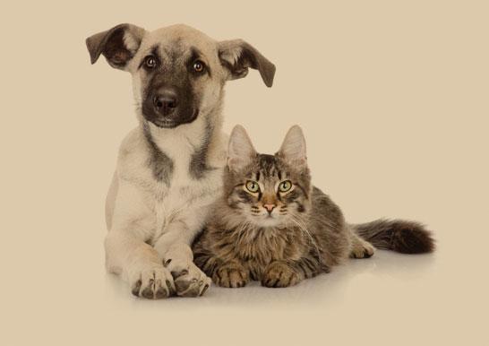 cias-petsteps-uniquefriendship-dogcat